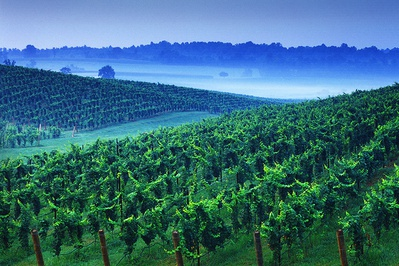 Shelton Vineyards, Surry County Yadkin Valley NC