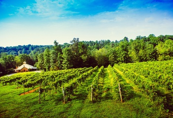 Explore Elkin Winetinerary
