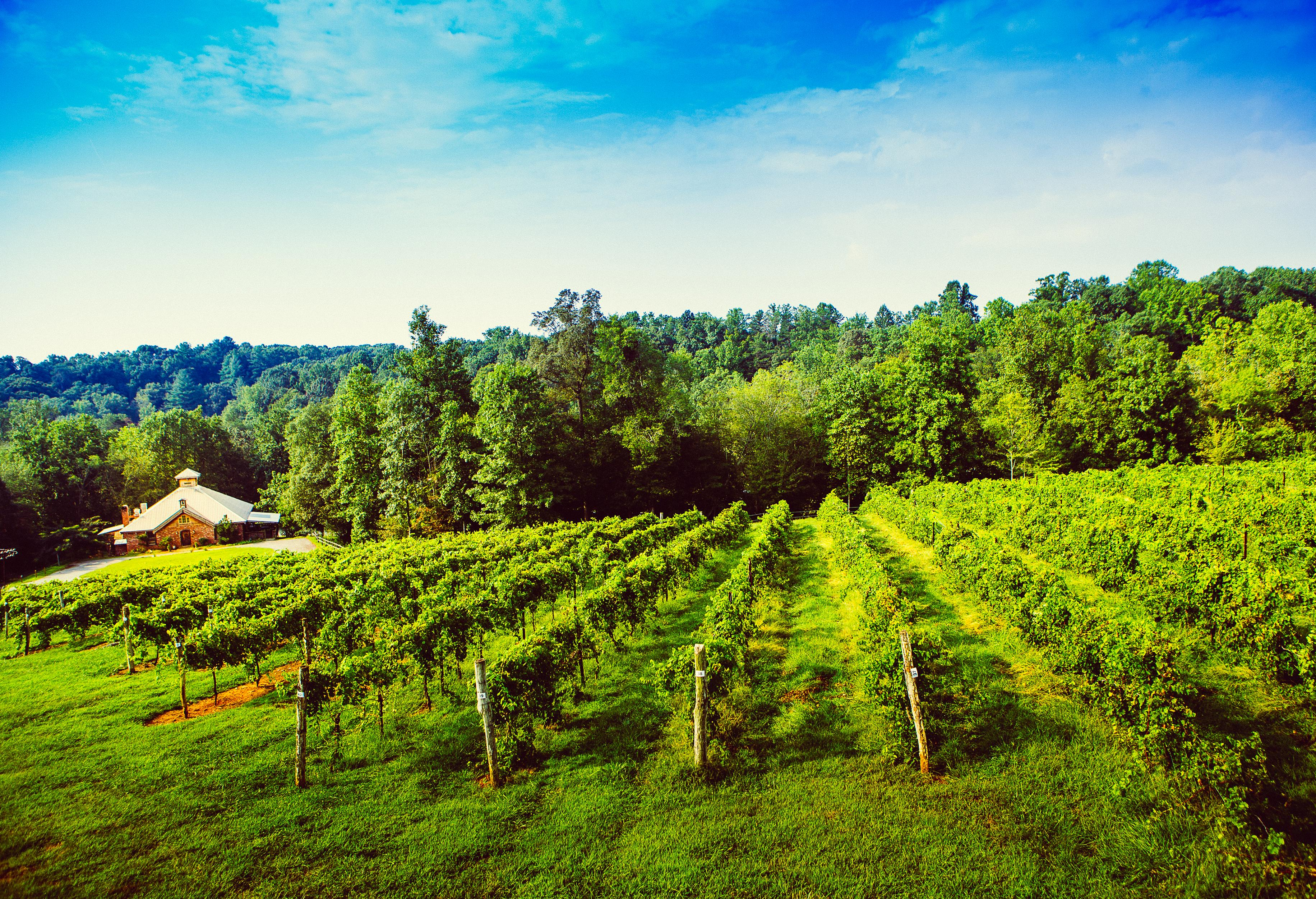 Elkin Creek Vineyard for the Yadkin Valley Winter Wine Passport 2017 - 2018